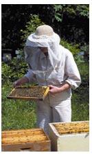 Норвежский музей пчеловодства  | Норвегия | NORGE.RU